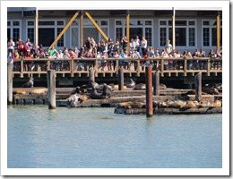 Pier 39... intrigued by the people, mostly. (click for larger photo, by Aleksandar Nikolic)