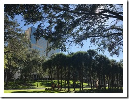 The Orlando Hyatt Regency between the trees (click for larger photo)