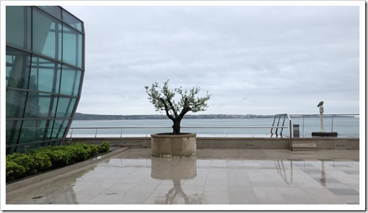 A lonely olive tree at Hotel Vile Park in Portoroz (click for larger photo)